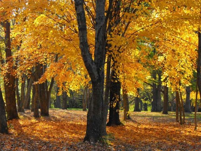 Ngắm mùa Thu tháng 10 đẹp đến ngỡ ngàng trên khắp thế giới - anh 6