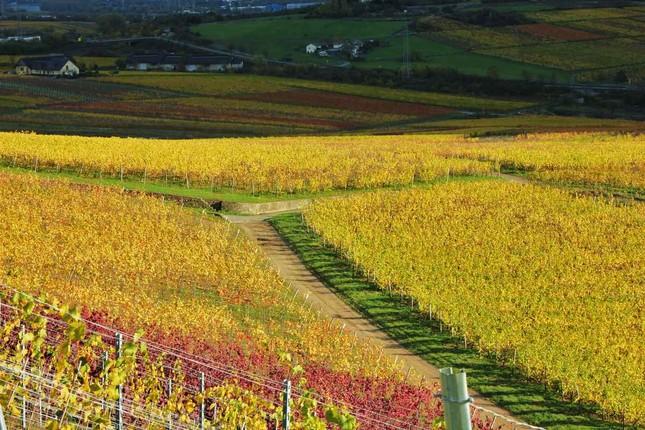 Ngắm mùa Thu tháng 10 đẹp đến ngỡ ngàng trên khắp thế giới - anh 7