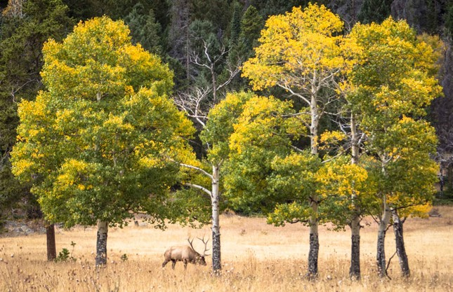 Ngắm mùa Thu tháng 10 đẹp đến ngỡ ngàng trên khắp thế giới - anh 8