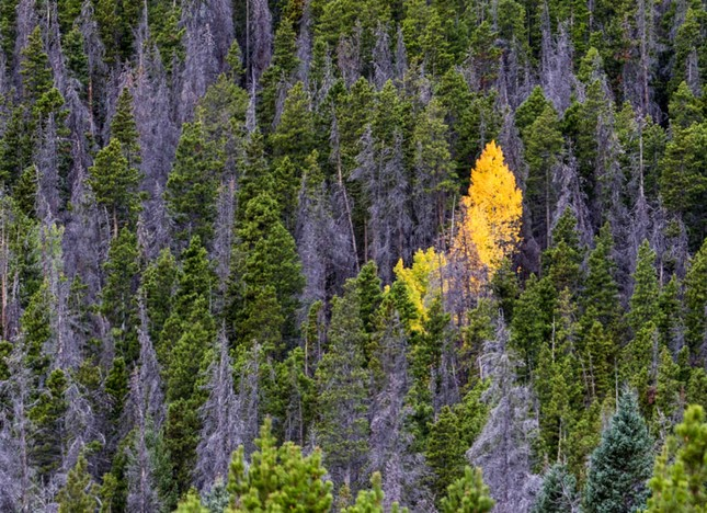 Ngắm mùa Thu tháng 10 đẹp đến ngỡ ngàng trên khắp thế giới - anh 10