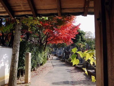 Ngắm sắc Thu đẹp ngỡ ngàng ở cố đô Kyoto, Nhật Bản - anh 4
