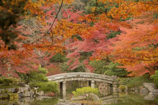 Ngắm sắc Thu đẹp ngỡ ngàng ở cố đô Kyoto, Nhật Bản - anh 1