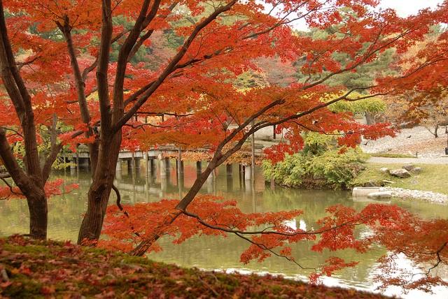Ngắm sắc Thu đẹp ngỡ ngàng ở cố đô Kyoto, Nhật Bản - anh 10