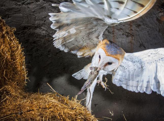 Thưởng thức bộ ảnh tuyệt đẹp trong cuộc thi Photo 2015 của National Geographic - anh 14
