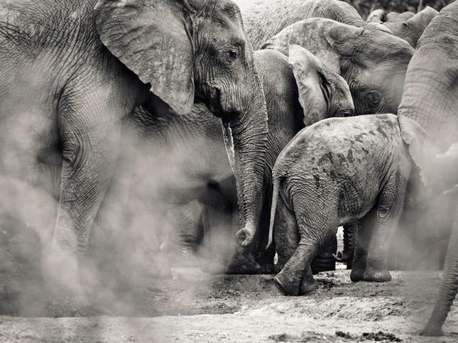 Thưởng thức bộ ảnh tuyệt đẹp trong cuộc thi Photo 2015 của National Geographic - anh 21