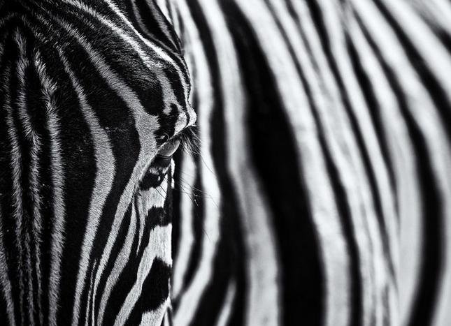 Thưởng thức bộ ảnh tuyệt đẹp trong cuộc thi Photo 2015 của National Geographic - anh 5