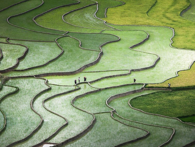Thưởng thức bộ ảnh tuyệt đẹp trong cuộc thi Photo 2015 của National Geographic - anh 9
