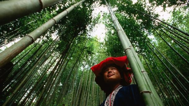 Nét đẹp của cánh đồng lúa Việt Nam trên trang báo nước ngoài - anh 3
