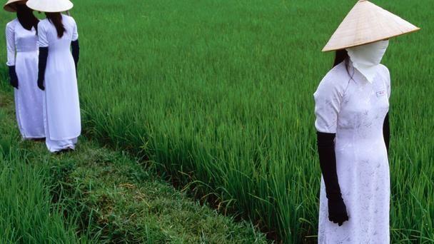 Nét đẹp của cánh đồng lúa Việt Nam trên trang báo nước ngoài - anh 4