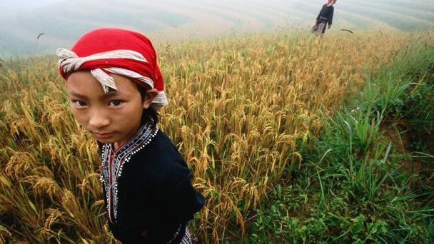 Nét đẹp của cánh đồng lúa Việt Nam trên trang báo nước ngoài - anh 5