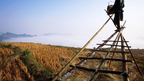 Nét đẹp của cánh đồng lúa Việt Nam trên trang báo nước ngoài - anh 6