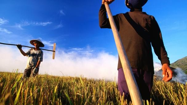 Nét đẹp của cánh đồng lúa Việt Nam trên trang báo nước ngoài - anh 7
