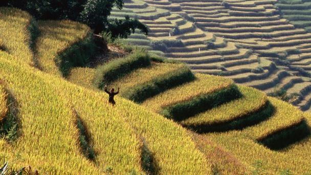 Nét đẹp của cánh đồng lúa Việt Nam trên trang báo nước ngoài - anh 8