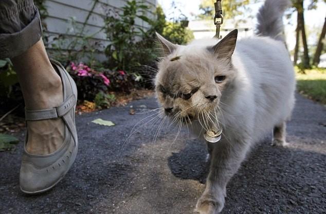 Chú mèo hai mặt lập kỷ lục Guinnes đã qua đời ở tuổi 15 - anh 3