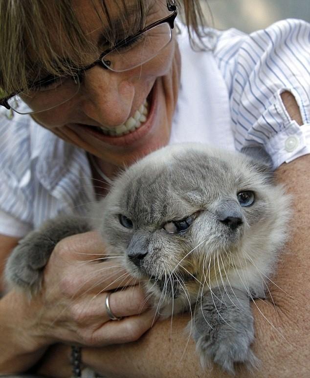Chú mèo hai mặt lập kỷ lục Guinnes đã qua đời ở tuổi 15 - anh 2
