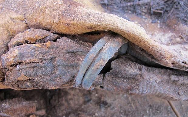Phát hiện hơn 1 triệu xác ướp Ai Cập - anh 1
