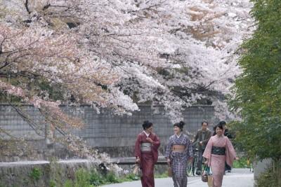Thưởng lãm lễ hội ngắm anh đào Hanami xứ Phù Tang - anh 7