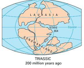 Pangaea và câu chuyện về Thuyết Trôi dạt Lục địa - anh 2