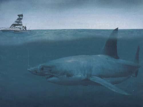10 quái vật đáng sợ nhất thế giới trong lòng đại dương - anh 10