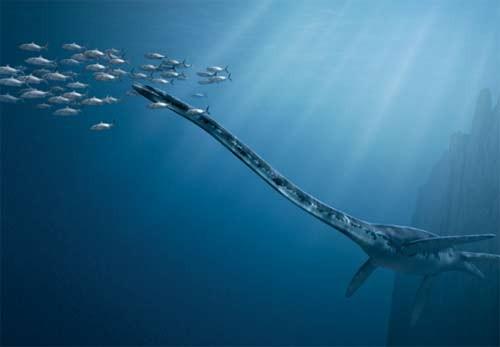 10 quái vật đáng sợ nhất thế giới trong lòng đại dương - anh 3