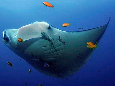 """Thế giới bí ẩn loài cá mệnh danh """"bóng ma của đại dương"""" - anh 1"""