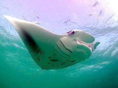 """Thế giới bí ẩn loài cá mệnh danh """"bóng ma của đại dương"""" - anh 2"""