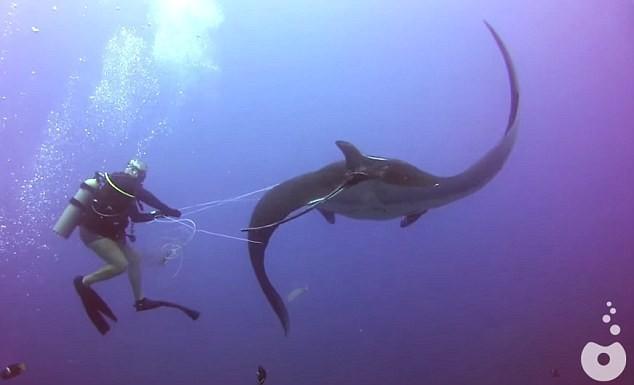 """Thế giới bí ẩn loài cá mệnh danh """"bóng ma của đại dương"""" - anh 5"""
