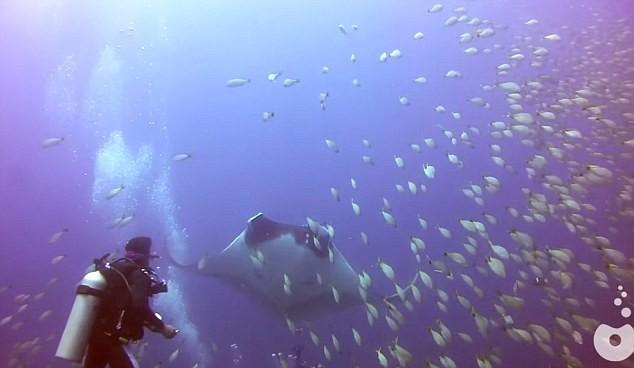 """Thế giới bí ẩn loài cá mệnh danh """"bóng ma của đại dương"""" - anh 6"""