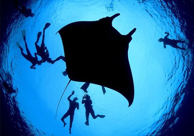 """Thế giới bí ẩn loài cá mệnh danh """"bóng ma của đại dương"""" - anh 7"""