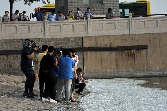 Cá chết nổi trắng mặt sông gần khu vực vụ nổ Thiên Tân - anh 4