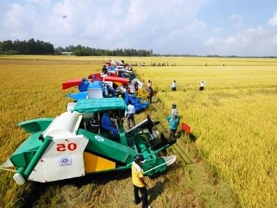 Đầu tư cho nông nghiệp (Bài I): Bài toán khó cho cánh đồng mẫu lớn - anh 1