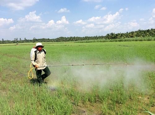 Đầu tư cho nông nghiệp (Kỳ 2): Chương trình cánh đồng mẫu lớn liệu có bị lợi dụng? - anh 1