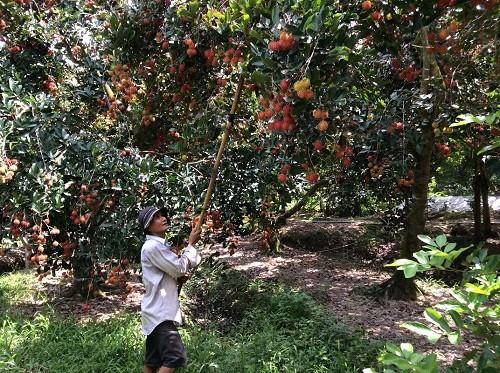 Đầu tư cho nông nghiệp (Bài IV): Tái cơ cấu nông nghiệp, vẫn là ẩn số - anh 1