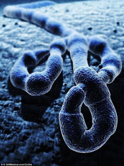 Nữ sinh 16 tuổi phát minh công cụ thử nhanh Ebola - anh 2