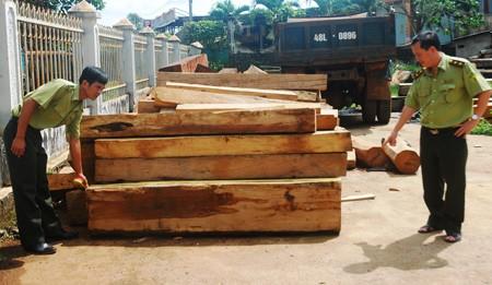 Đắk Lắk: Vi phạm từ rừng đến xưởng gỗ - anh 2