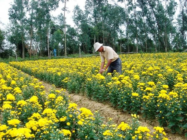 Tìm lối đi trong đào tạo nghề lao động nông thôn - anh 1
