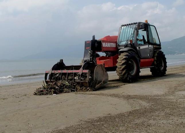 Hàng chục tấn bèo phủ suốt 3 km bãi biển Quy Nhơn - ảnh 1