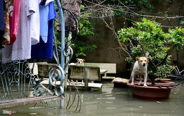 Sống chung với nước ngập cả ngày ở Sài Gòn - ảnh 10