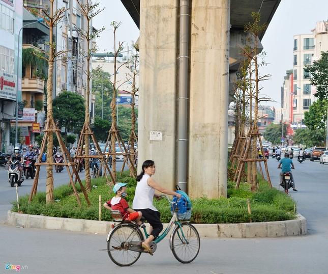 Hà Nội trồng cây dưới gầm đường sắt trên cao - ảnh 1