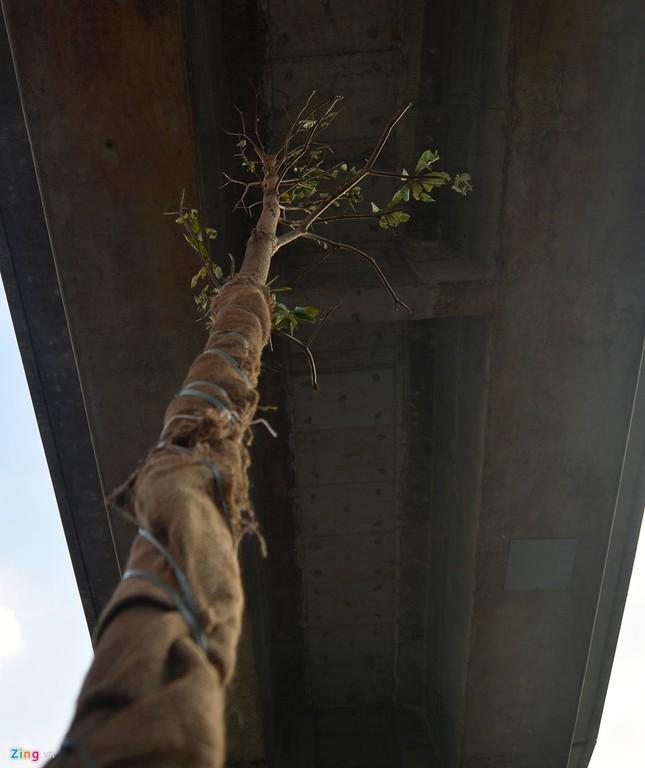 Hà Nội trồng cây dưới gầm đường sắt trên cao - ảnh 2