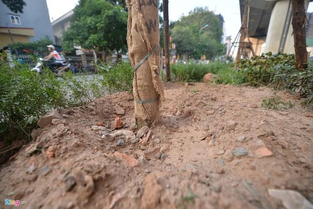 Hà Nội trồng cây dưới gầm đường sắt trên cao - ảnh 4