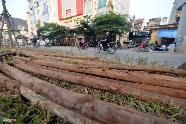Hà Nội trồng cây dưới gầm đường sắt trên cao - ảnh 6