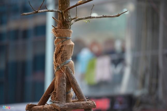 Hà Nội trồng cây dưới gầm đường sắt trên cao - ảnh 3