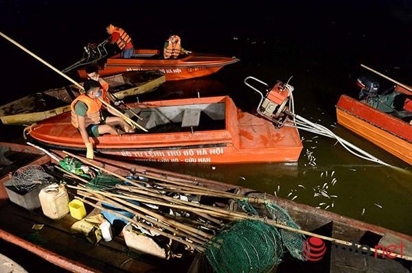 200 tấn cá chết ở Hồ Tây được đưa đi đâu? - ảnh 1