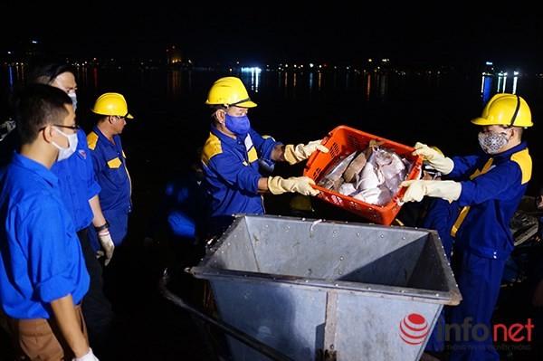 200 tấn cá chết ở Hồ Tây được đưa đi đâu? - ảnh 3
