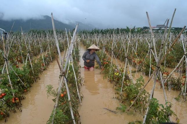 Tiền tỷ trôi theo lũ ở vùng trồng rau lớn nhất nước - ảnh 1