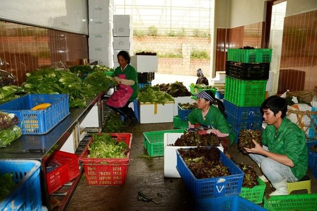 Tiền tỷ trôi theo lũ ở vùng trồng rau lớn nhất nước - ảnh 2