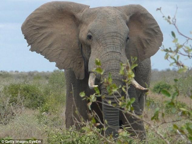 Khách du lịch bị voi giẫm chết - ảnh 1