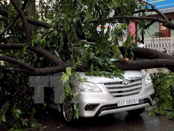 TP.HCM tiếp tục mưa lớn, nhiều cây xanh ngã đổ đè bẹp ôtô - ảnh 1