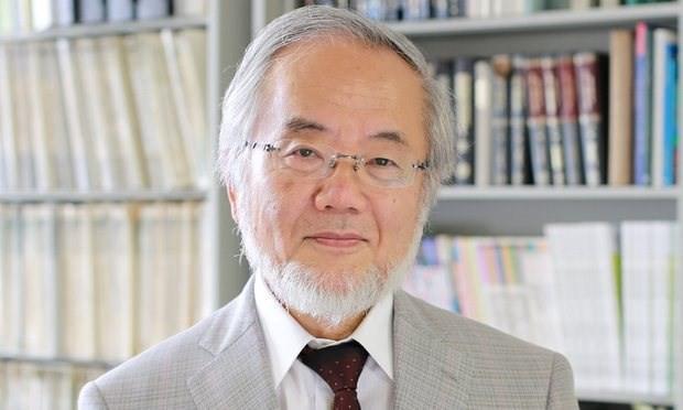 Công trình nghiên cứu giành giải Nobel Y học 2016 có gì đặc biệt? - ảnh 1